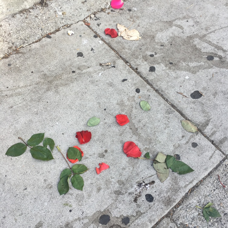 RosesonPavement